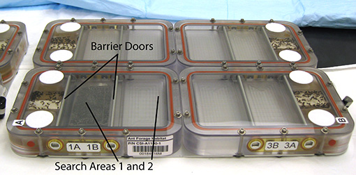 Ant habitats designed for the ISS