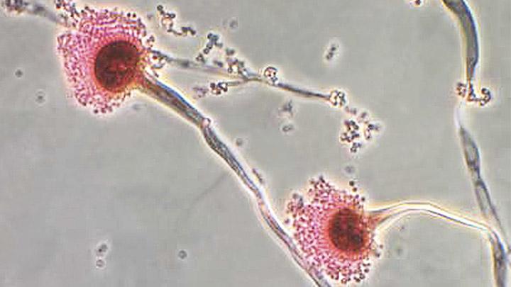 Microorganisms : BioEd Online