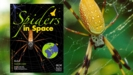 Thumbnail Image for Spiders in Space