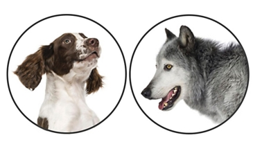 Dogs—A Model for Modern Genetics