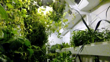 Do Plants Need Light?