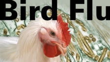 Bird Flu: Is a Pandemic Looming in Our Future?