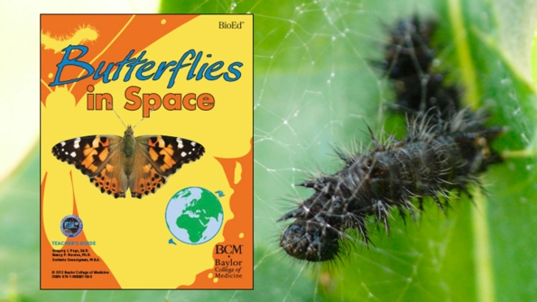 Butterflies in Space