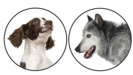 Thumbnail Image for Dogs—A Model for Modern Genetics