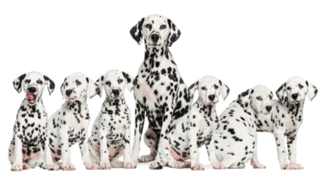 Genetic Testing and Designer Dogs