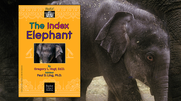 Thumbnail Image for E-Book: The Index Elephant